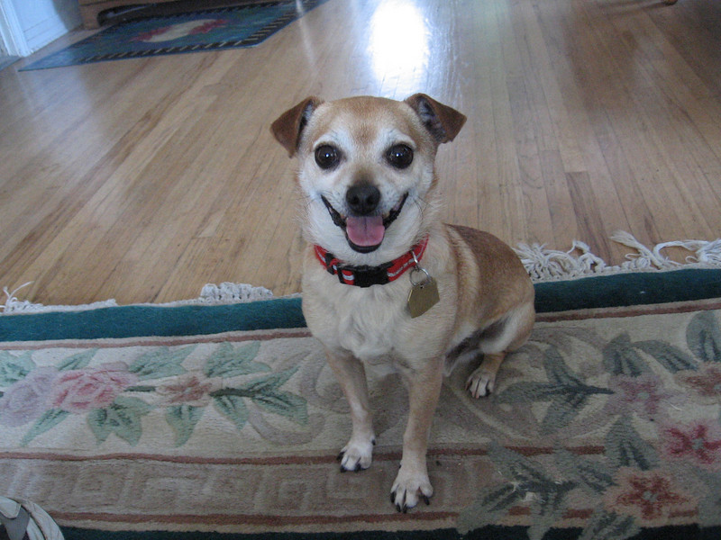 7/15/10 Tim was my second foster dog, via Canine Adoption and Rescue League.  Fortunately, he is now in a forever home with two other doggies and a cat.
