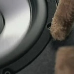 BLAUPUNKT - Why You Shouldn't Put Stuffed Animals In The Rear WIndow