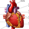 The Heart Operation