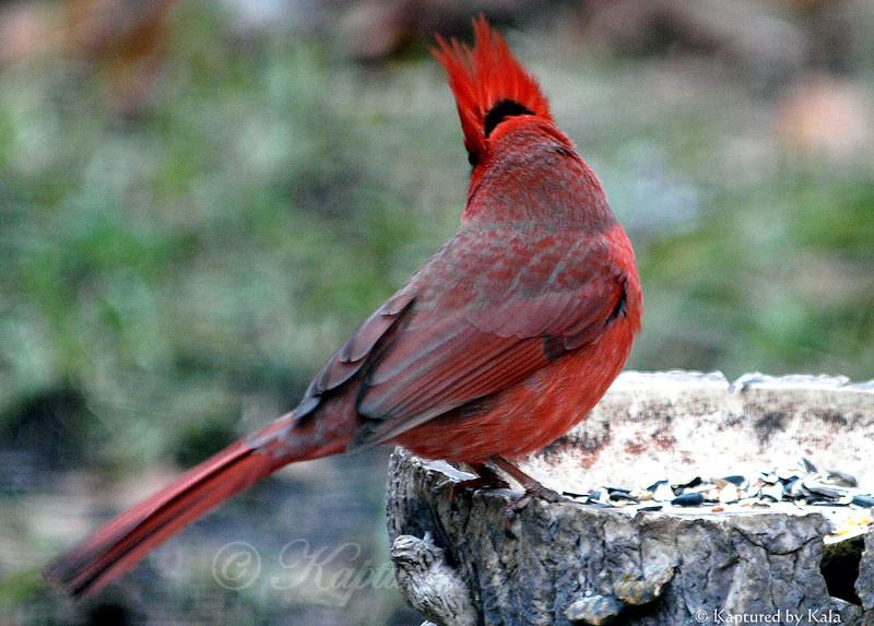 If Don King Were a Bird