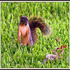 Squirrel Zombie Apocalypse