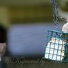 Headless Sparrow?