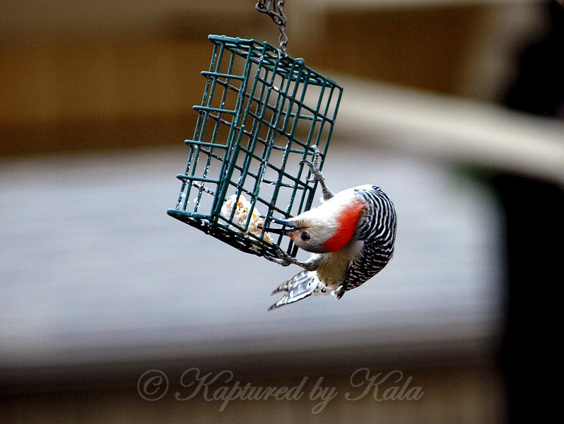 How to Get the Last Bite of Suet