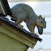 A Well Balanced Squirrel