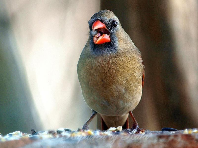 She is a Very Talkative Bird