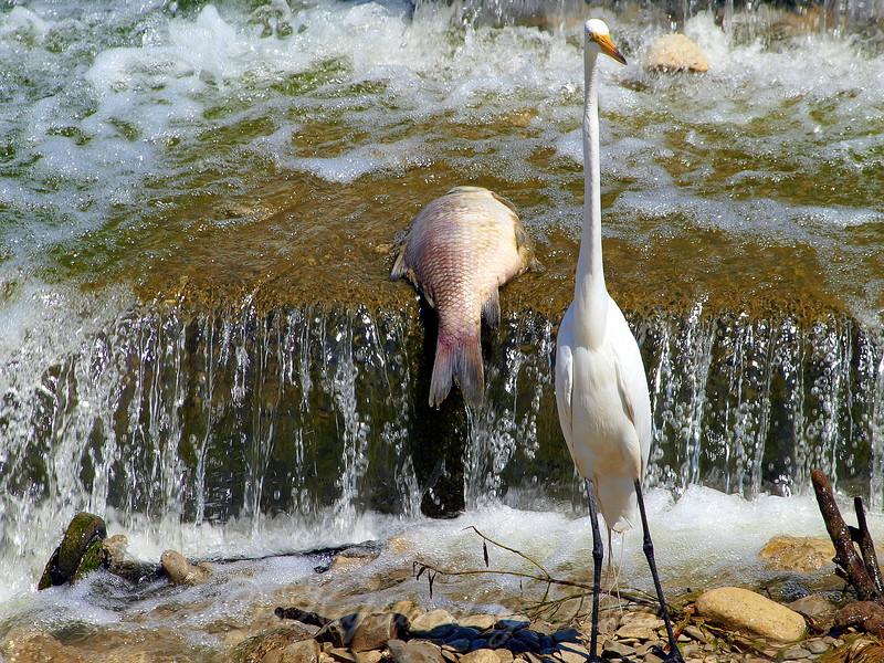 Nope, Don't See Any Fish