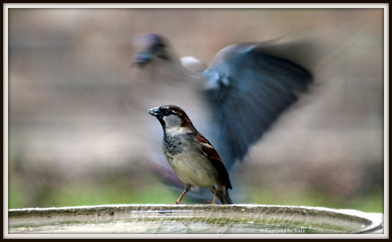 Run Sparrow!  The Monster's Coming!