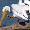 Doing The Pelican Dance