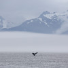 Atmospheric cloud, fog and mist in Frederick Sound with a Humpback fluke