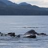 Whale soup!!