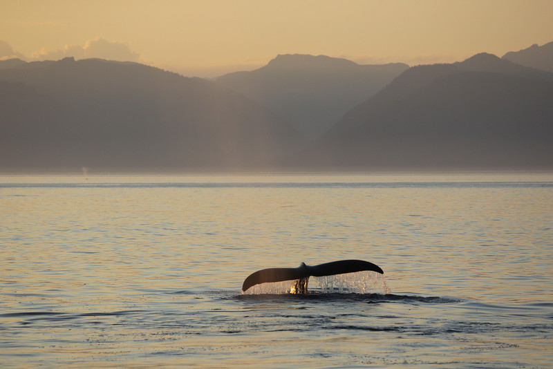 Sunset and whales in Frederick Sound.