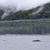 Atmospheric cloud, fog and mist in Frederick Sound with Humpbacks feeding.