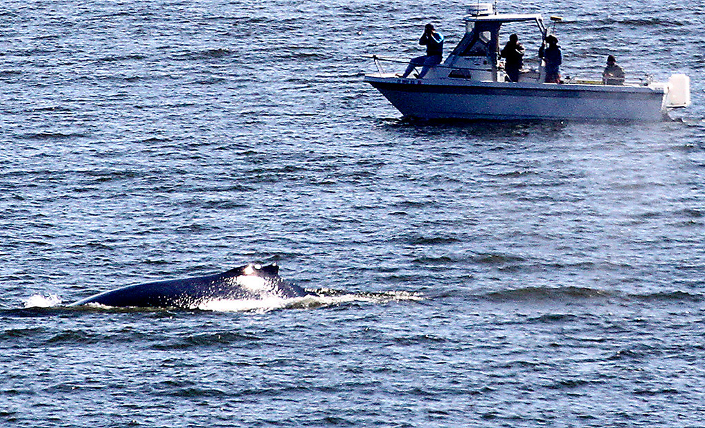 . Four mariners find themselves in a perfect vantage point to watch a whale in the Monterey Bay. (Shmuel Thaler -- Santa Cruz Sentinel)