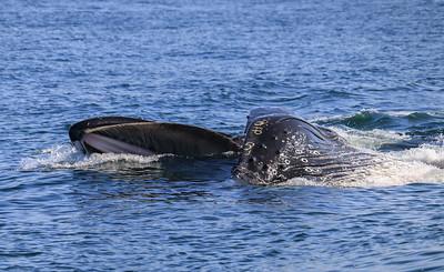 Baleen