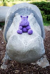 20170708 Hippo on Hippo