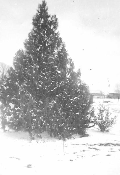 Tree in yard.