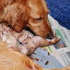 Nyfödda