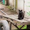 Fekete macska, Budapest