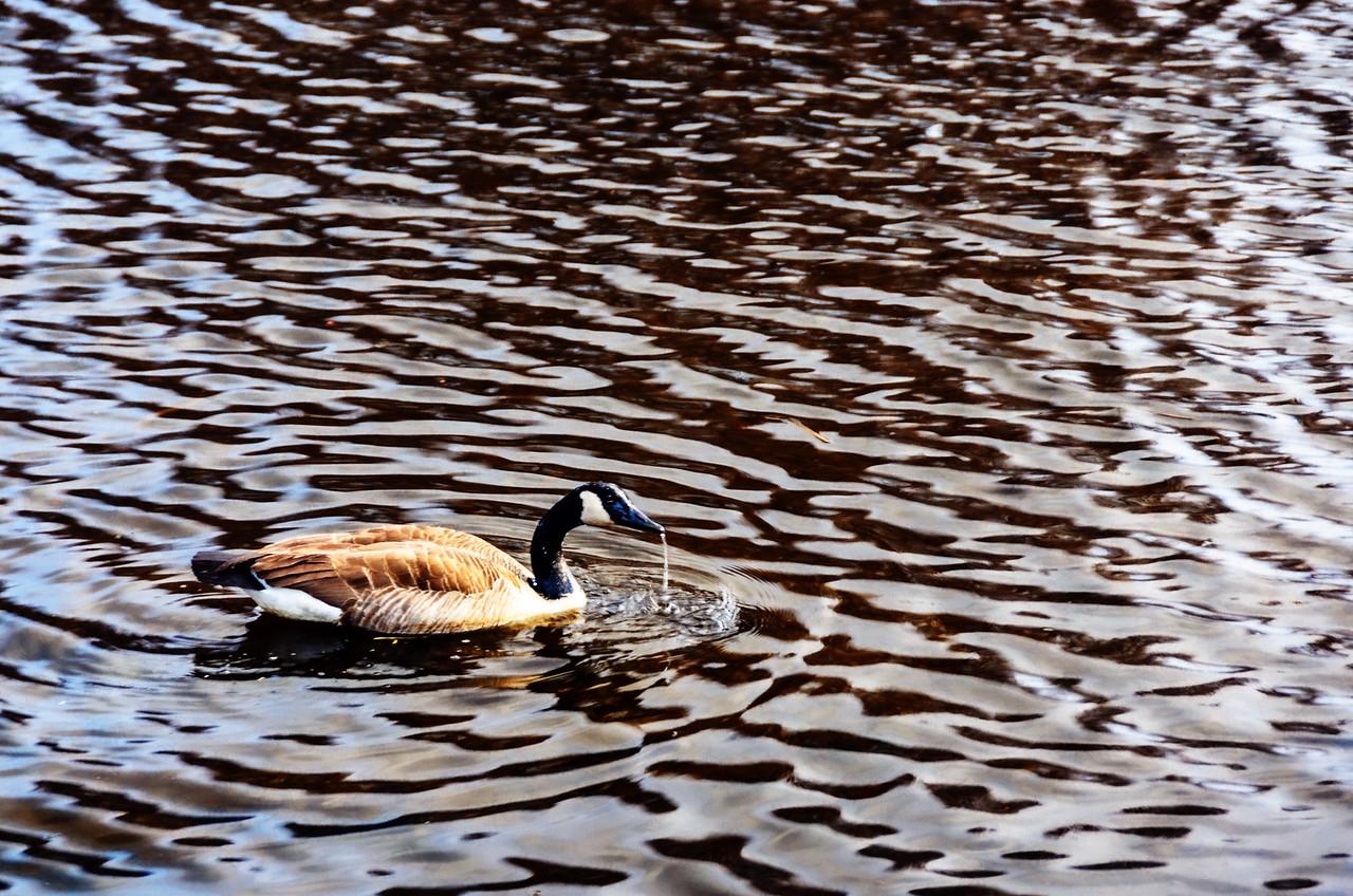 bird by Martin Heller