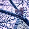 winter by Martin Heller
