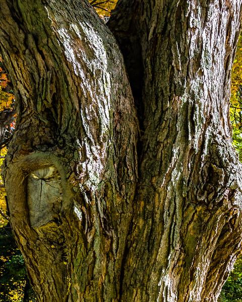 trunk by Martin Heller
