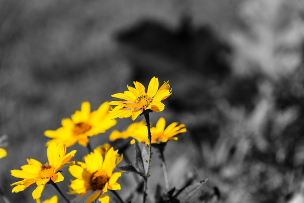 selective color by Martin Heller
