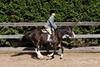 PonyHunterdsc_0442