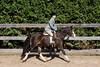 PonyHunterdsc_0436