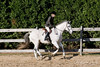 HorseHunter26dsc_0759