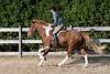 HorseHunter26dsc_0752