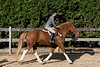 HorseHunter26dsc_0763