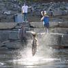 09-08-2013-SalmonFishing-_MG_66401-3
