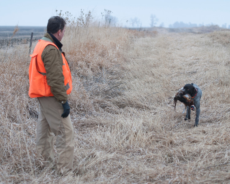 Friedrich of Dutchman's Hollow retrieves to owner Kurt Eickhoff