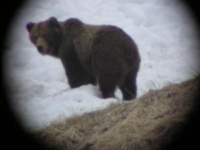 Seen Through a Spotting Scope 1