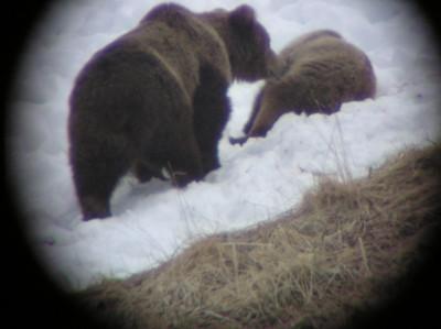 Seen Through A Spotting Scope II