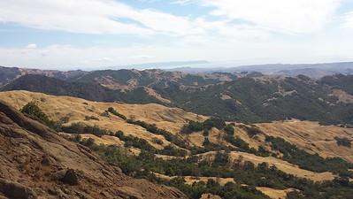 Aoudad Sheep Central Coast of California