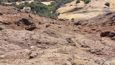 Aoudad Sheep On the Central Coast of California