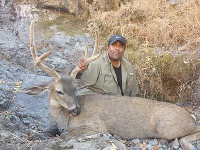 2018 Blacktail Deer  Matt Ward