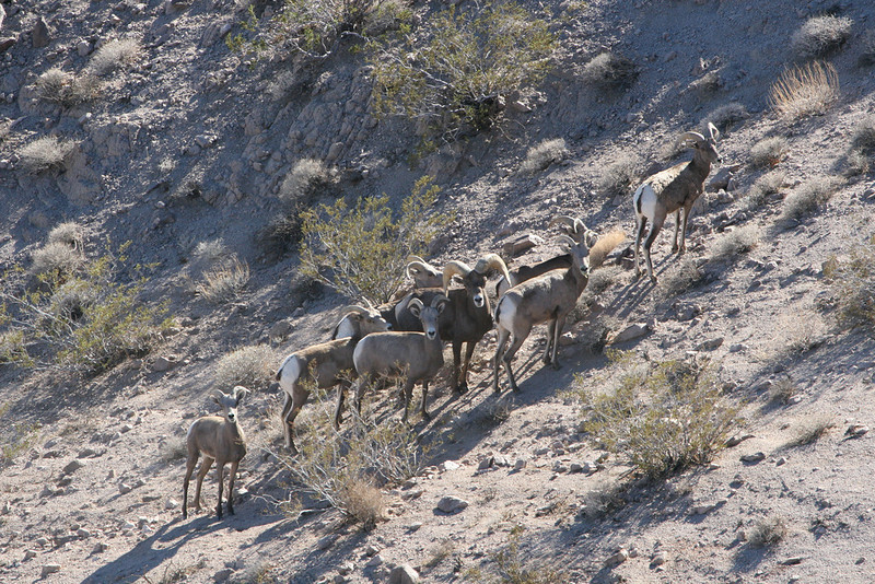 Contact Anderson Taxidermy & Guide Service, Inc., about hunt zones to apply for. If you draw a sheep tag choose Don Anderson as your guide for your once in a lifetime hunt where the choice is yours. www.thehuntpro.com