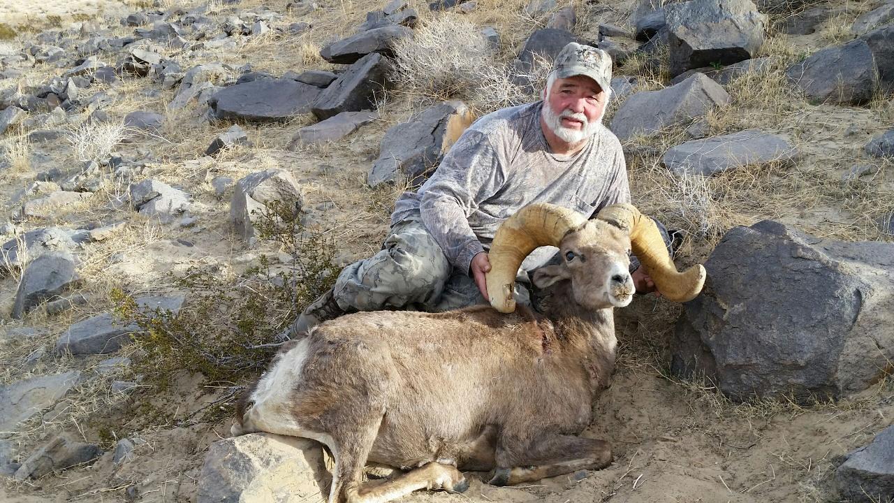 Steve Bennett-2015-Cady Mountains-Desert Bighorn Sheep