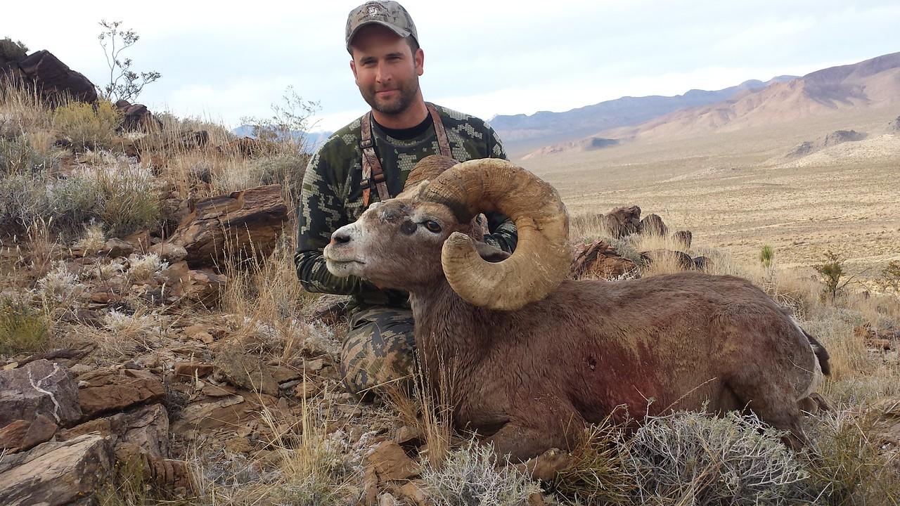 2015-Clark/Kingston Mountains-Desert Bighorn Ram