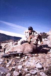 Rocky Mountain Bighorn Sheep Hunt