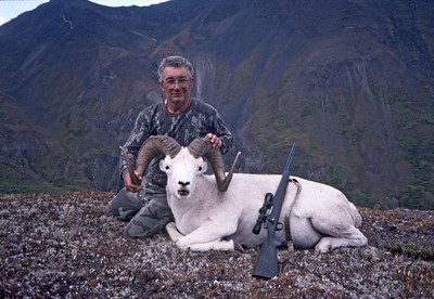 Wrangell Mountains Alaska Dall Sheep