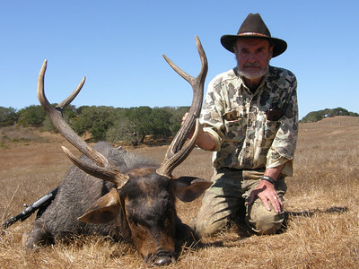 2009 Sambar Deer - Bob Howard