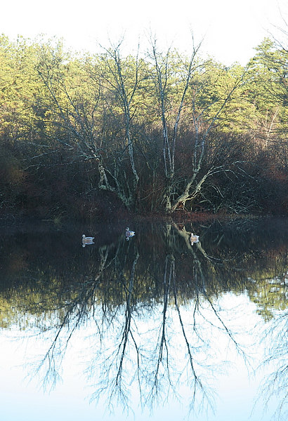 The vistas at the club are just outstanding.  You would think you were far upstate.  A very nice reflective shot of wood duck decoys on the pond.  Outdoor activities are the best.<br /> <br /> Captain Al Lorenzetti