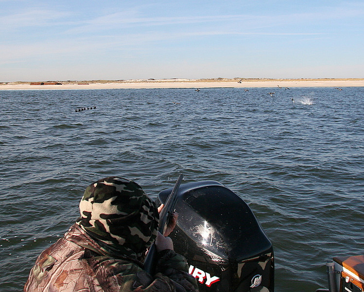 """The now finished duck drops like a rock and more kept coming.  It was a good shoot with lots of action and a great day on the water.<br /> <br /> I was shooting my new Benelli """"Black Eagle II"""" with cryo chokes and it was blasting them out of the sky.<br /> <br /> Good equipment brings good results."""