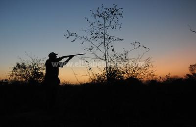 Senegal Hunt