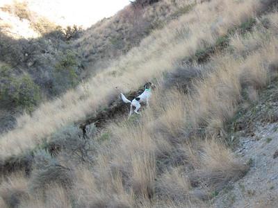 Idaho 2008 (Marshall)