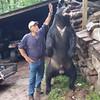 Dom DeMaria bear