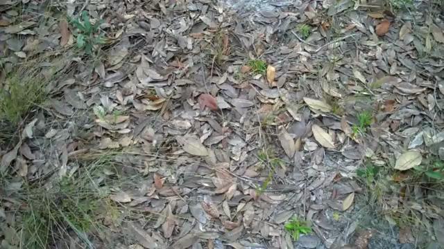 Fresh scrapes along a trail.